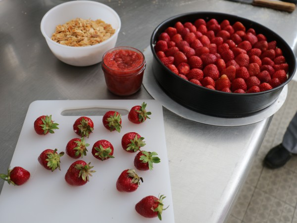 Erdbeertorte mit Frischkäse Erdbeeren aus Brandenburg